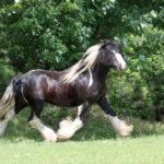 Гнедая масть лошади