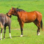 Современные лошади