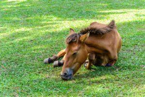 Лошадь больная