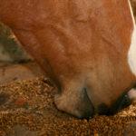 Питание лошадей разными кормами