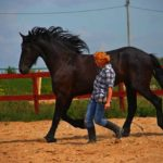 Индивидуальный подход к лошади