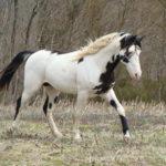 Серо-пегая лошадка