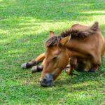 Конь лежит из-за высокой температуры