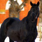 Русский конь