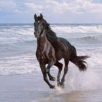 Лошадь бежит галопом