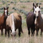 Современные породы лошадей