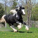 Конь быстро бежит
