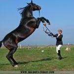 Подготовка коня к верховой езде