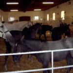 Лошади в чистом загоне