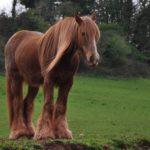 Красивые клички для лошадей в виде таблицы