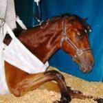 У лошади высокая температура тела