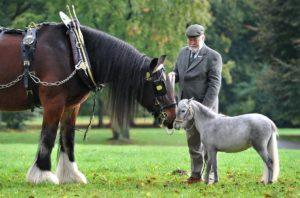 Лошади разные по весу