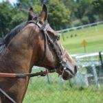Лошадь верховая