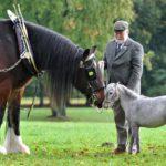 Лошади разной весовой категории