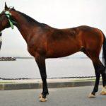 Легкоупряжный конь