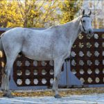 Конь серый в гречку