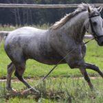 Лошадь и жеребенок сивой масти