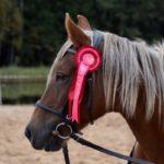Конь с уздечкой
