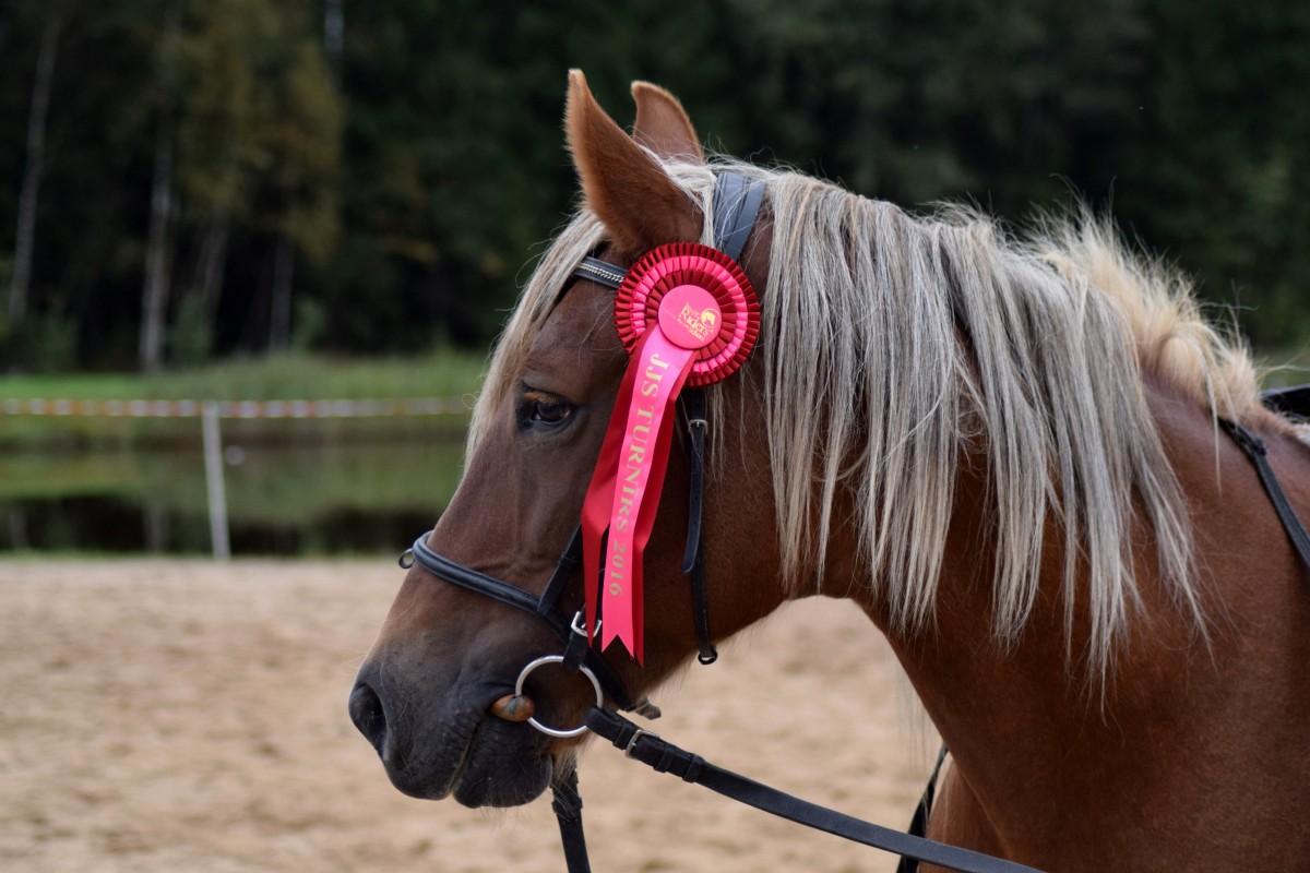 Уздечка для лошади своими руками фото 518