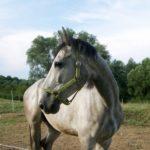 Светло - серая лошадка
