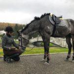 Привыкание лошади к человеку