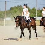 Обучение лошадей