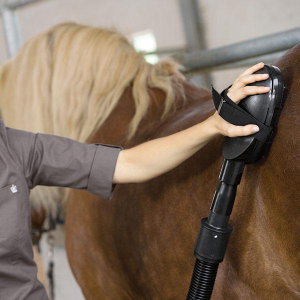 пылесос для чистки лошадей