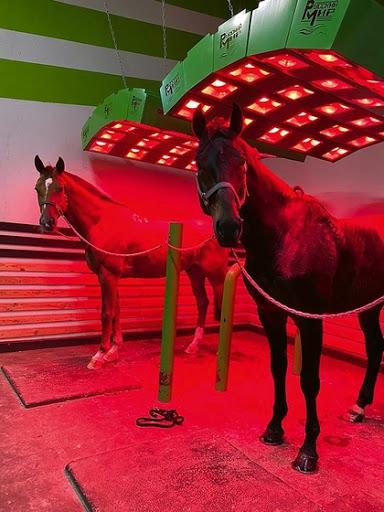 сушка лошадей феном