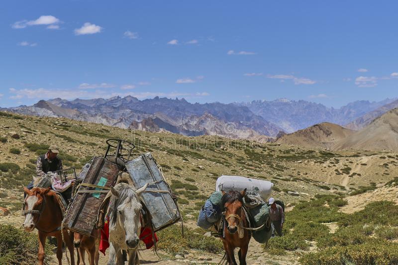 loshadi-i-osly-nosya-tyazhelye-tovary-v-gorah-gimalaev-doline-markha-ladakh-indii-127288835